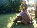 Kid Rides A Giant Tortoise!?