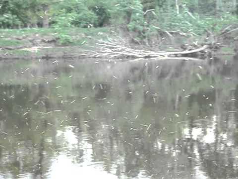 рыбалка весной на клязьме