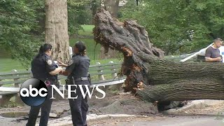 Mom, 3 children injured by fallen tree in Central Park - ABCNEWS