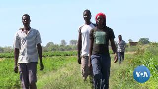 UN Agency Hopes to Revive Zimbabwe's Agriculture Sector - VOAVIDEO
