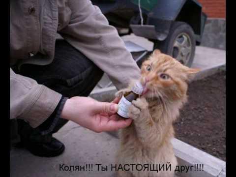 Самые смешные коты кошки и котята картинки