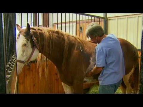 Healing horses that survived the Okla. twister