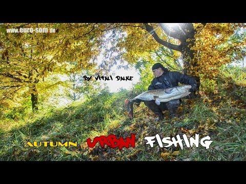 Осенняя ловля сома на канале / Wallerfischen im Herbst am Kanal