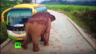 Wildlife vs transport: Elephant attacks vehicles in China - RUSSIATODAY
