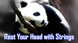 Royalty Free :Rest Your Head with Strings