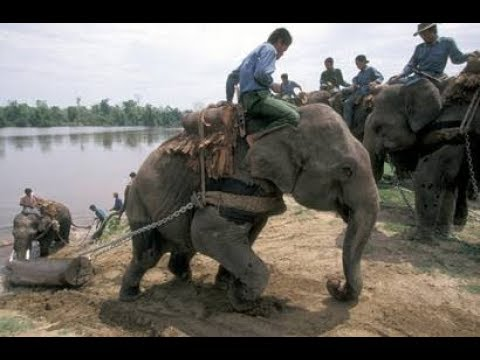 Elephant Power Video Uploaded by TNI News Agency.