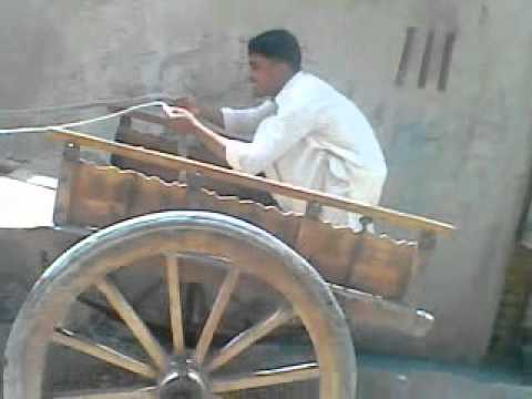 donkey cart theif