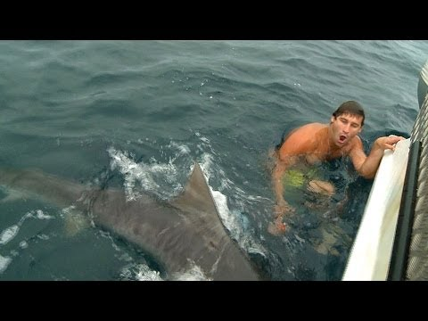 Near Miss Shark Attack