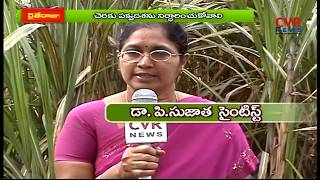 చెరకు నరికివేతలో మెలకువలు : Cultivation Techniques of Sugarcane | Raithe Raju | CVR News - CVRNEWSOFFICIAL