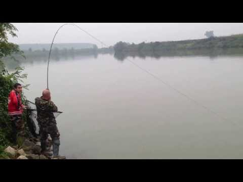 pecanje soma 1 deo tezina 120kg duzina 2 metra i 60cm majstor pecanja GORAN TODOROVIC