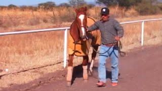 Carreras de caballos en Arroyo Seco de Arriba (Tepetongo, Zacatecas)