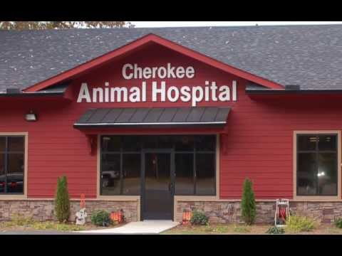 Friendly Veterinarians and Cozy Animal Hospital Canton Ga.