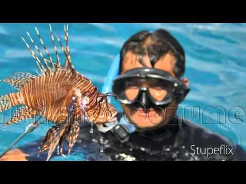 Safari Cazando al Pez León en Cozumel (Lionfish hunting Safari in Cozumel)