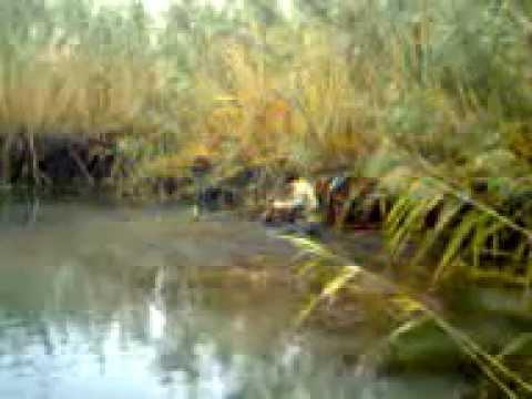 рыбалка на рисовых чеках в крыму