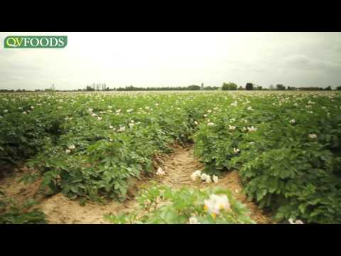 Growing potatoes, from field to supermarket, by QV Foods