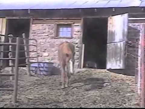 Poisoned Horses 2011 documentary movie, default video feature image, click play to watch stream online