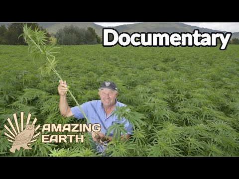 Fantastic Plants & Why They Matter | Cannabis, The Miraculous Plant? | Amazing Earth Pt. 1