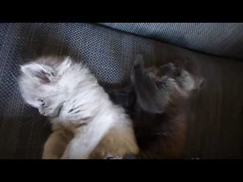 Cute Kittens Video