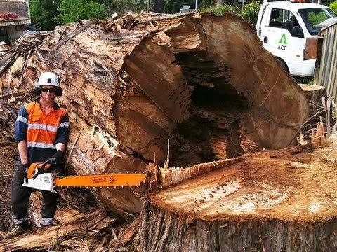Big Extreme Hazard Crane Tree Cutting Removals ACE