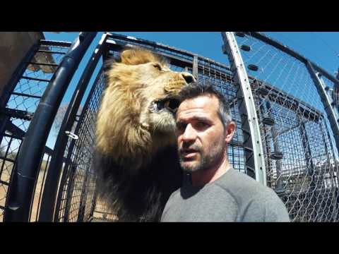 It's MOVING Day! - Part 1   The Lion Whisperer