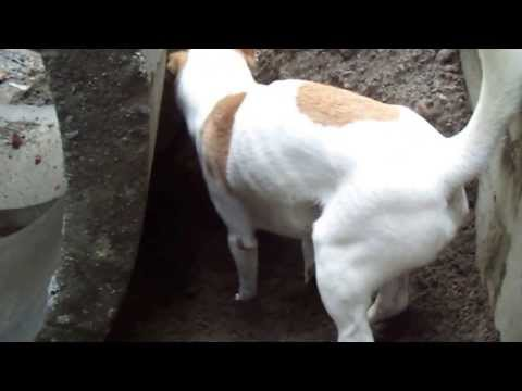 An Interview with Jepri, the Digging 'Kampung' Dog from Java