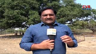 Non-Stop Kodi Pandalu In West Godavari District | CVR News - CVRNEWSOFFICIAL