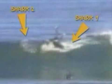 two sharks attack surfer in australia 2004