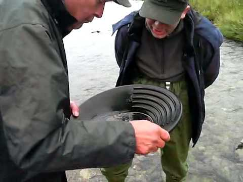 Gold Panning with Nelson - Pukanie z Nelsonem