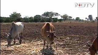 महाराष्ट्र में सूखे का खतरा , 200 तहसीलों में पानी की कमी - NDTVINDIA