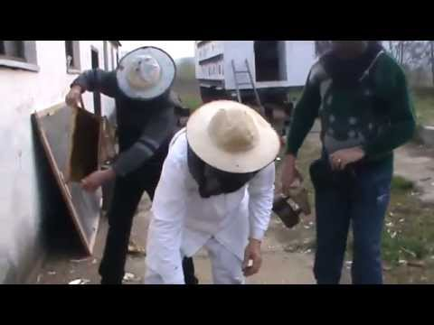 4/13 Lucrari de primavara la stupina cu 2 apicultori incepatori - Sfaturi practice de apicultura