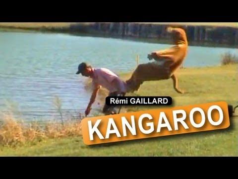 הקנגורו המשוגע