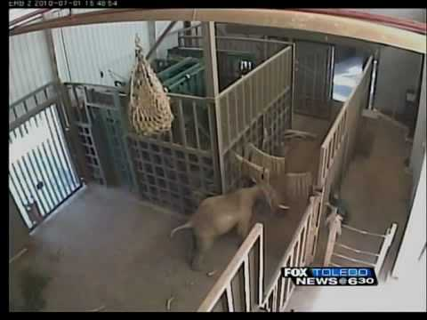 Zoo attack video released to public