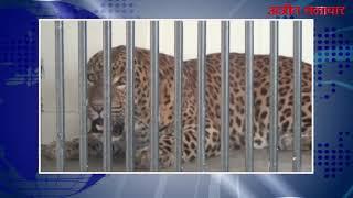 video : बठिंडा : अब देखे जा सकेंगे मिनी ज़ू में तेंदुए