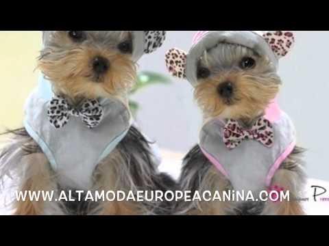ropa para perros, ropa para yorkshire terrier