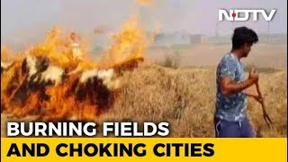 When Punjab's Farmers Openly Defied Stubble Burning Ban By Green Court - NDTV