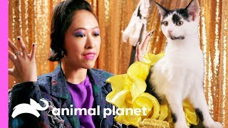 Road to the Kitty Halftime Show | Puppy Bowl XV - ANIMALPLANETTV
