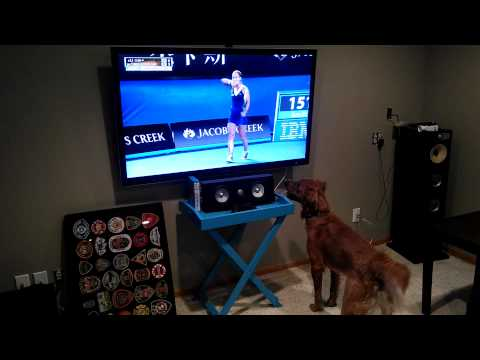 Happy Saturday: This Dog Really, Really Loves Tennis