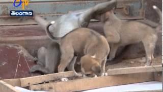 Monkey-Puppy Become Friends In Karnataka - ETV2INDIA
