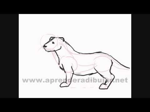 Dibujo de un perro a l piz c mo dibujar animales vidoemo - Dibujos sencillos ...
