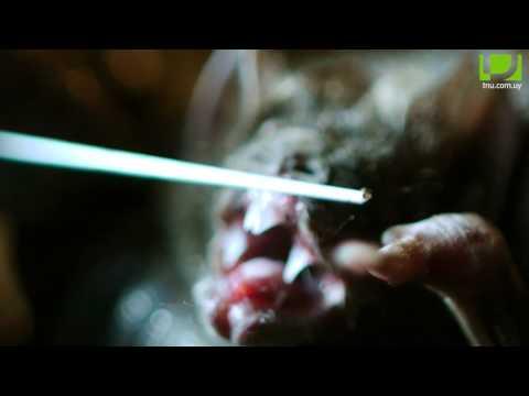 Ciencia salvaje (23/11/13): vampiros & murciélagos