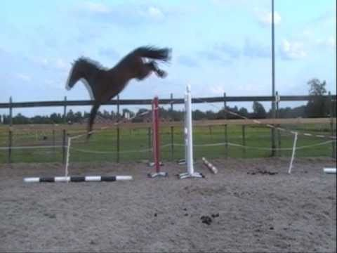 GRAND PRIX POTENTIAL ~ Tyson x Grosso Z (loose-jumping) **SOLD**