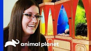 Kristen Wants A Truly Magical Enclosure For Her Three Snakes | Scaled - ANIMALPLANETTV