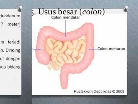 Sistem Pencernaan Manusia Camtasia rifna