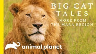 The Lion | Big Cat Tales: More from the Mara Region - ANIMALPLANETTV