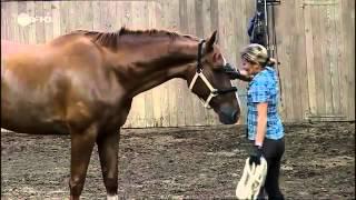 248 Pferde - Der rettende Sprung