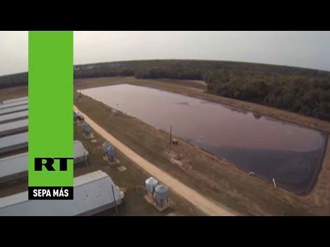 Un dron captura cómo granjas de cerdos expulsan estiércol al aire