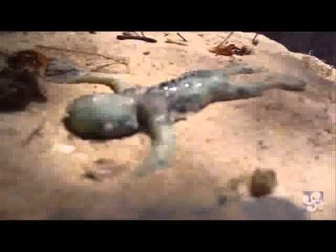 makhluk aneh ditemukan di dasar laut