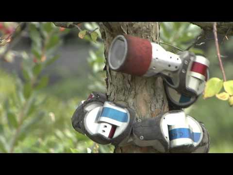 Робот – змея лезет на дерево