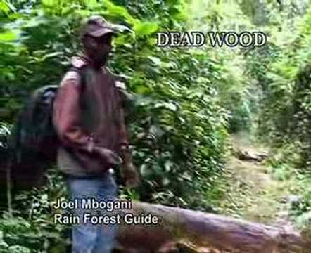 Kakamega Rain Forest part 3 of 6 Battle for survival