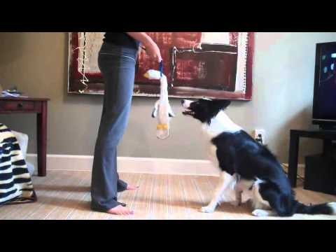 Impulse Control Game For Dogs